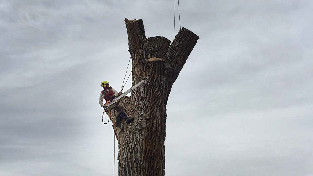 cottonwood crane removal